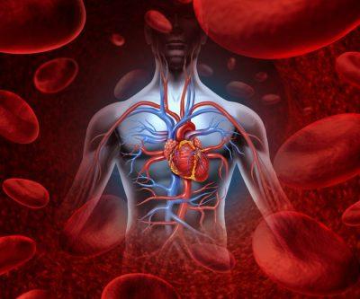 پاکسازی خون با داروهای گیاهی